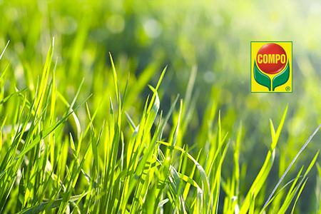 Saen Dungen Reparieren Ihr Rasen Wird Es Ihnen Danken